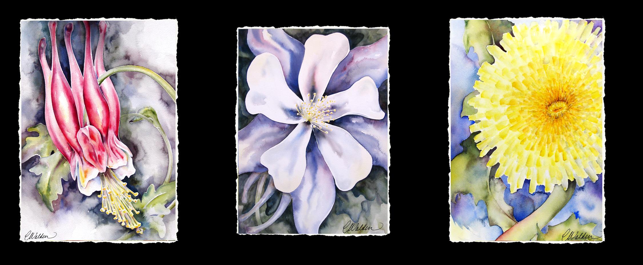 CO flowers
