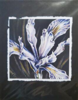 Iris Dance #1